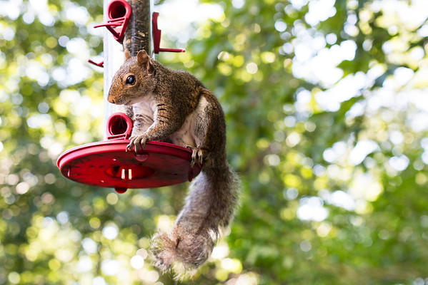 Squirrel at bird feeder