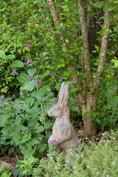 Garden Bunny statue with purple money plant