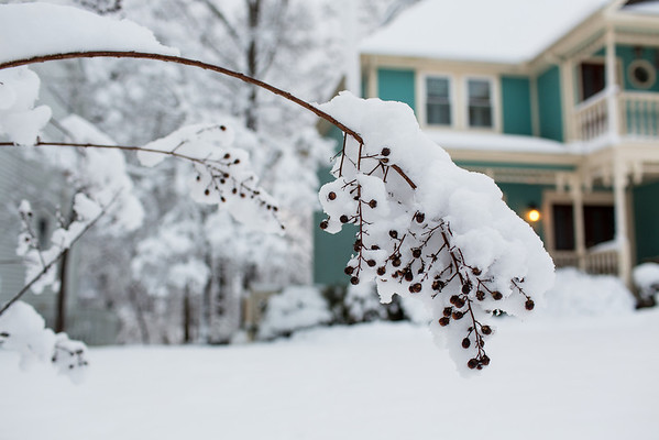 Nandina berries in the snow.