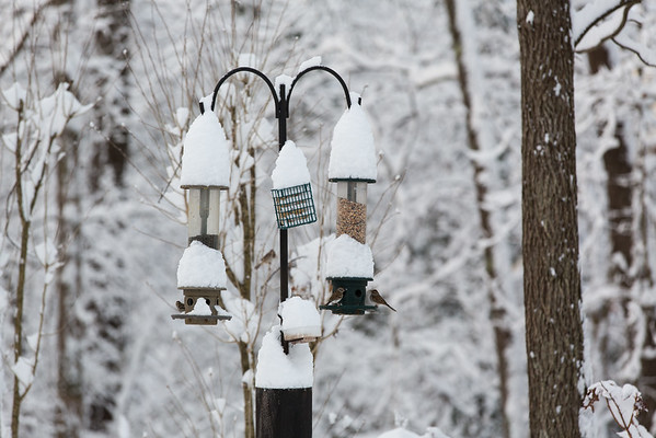 Snow on bird feeder