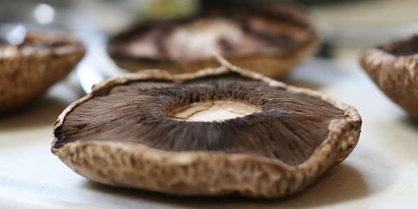 Portobello Mushroom