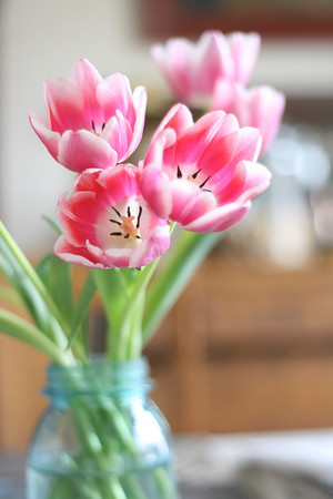 tulips in blue ball jar