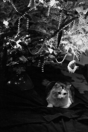 cat with Christmas tree in black and white