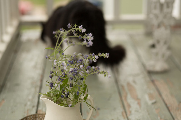 cat behind vase of flowers