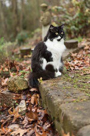 Black and white cat in the garden