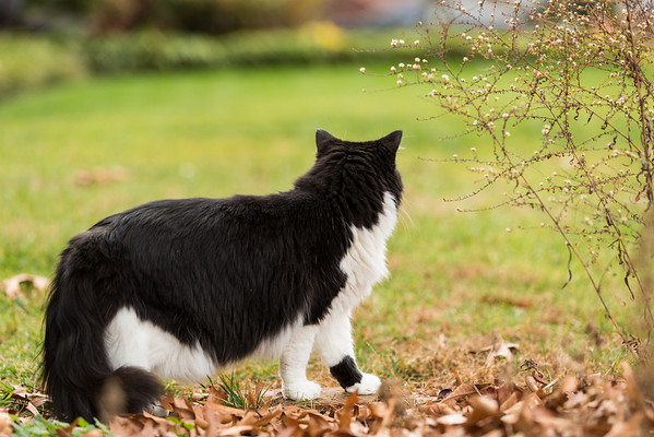 Black and white cat in the yard