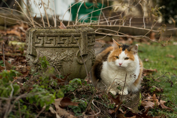 Calico cat by garden planter