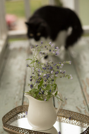 cat in background of vase with flowers