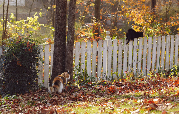 Two cats by the fence