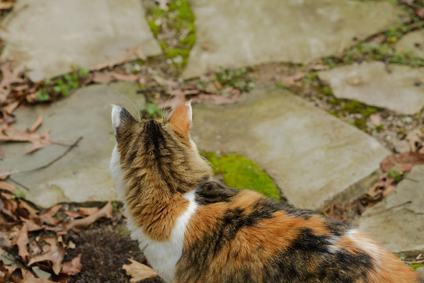 Calico cat on Walkway