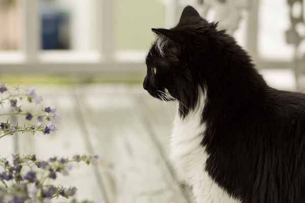 black and white cat with purple wild flowers