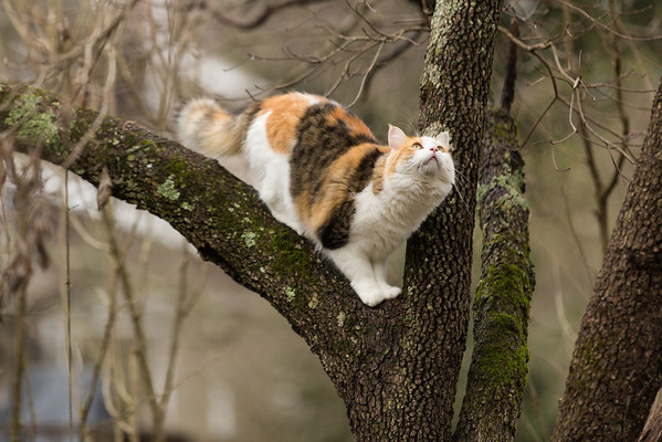 calico cat in tree