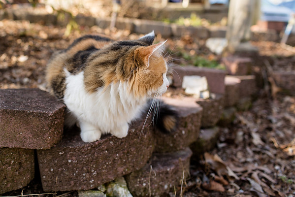 Cat on pavers