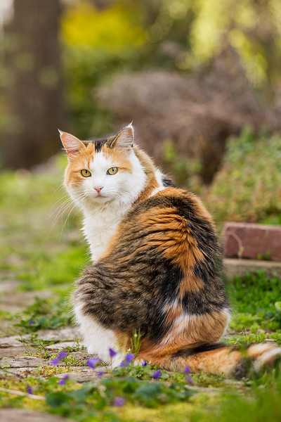 Calico cat in yard