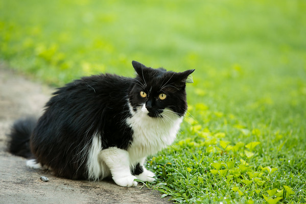 Black and White Cat | Sidewalk Shoes