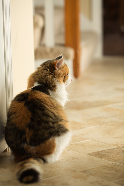 Kitty cat looking out door.