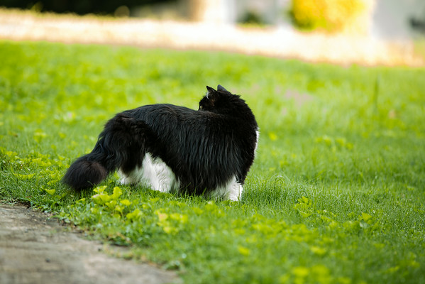 Black and White Cat on the grass | Sidewalk Shoes