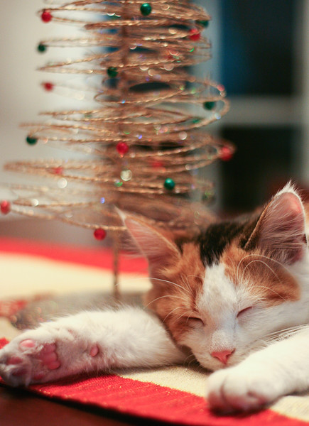 Calico kitten asleep by small tree