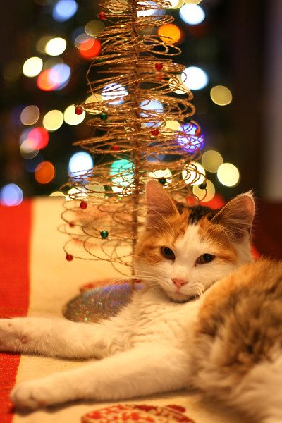 Calico cat with Christmas tree