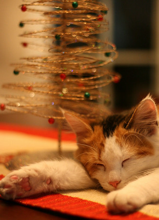 cat sleeping with tree