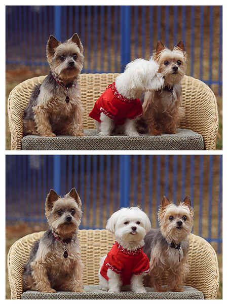 Pamela Greer Photography Pet Holiday Photos