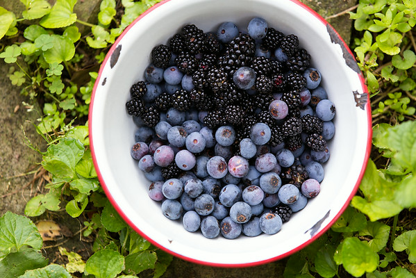 Blackberries and Blueberries | Sidewalk Shoes