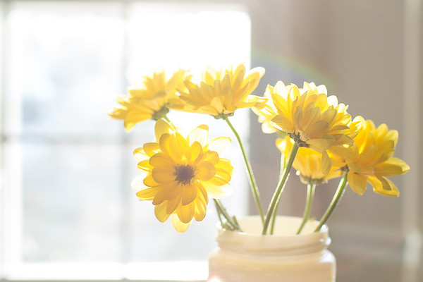 Yellow flowers in soft sunlight.