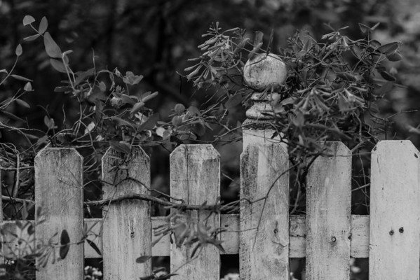 Sidewalk Shoes Picket Fence in Black and White