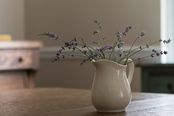 Lavender in white milk jug
