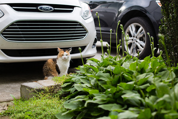 cat in front of cars