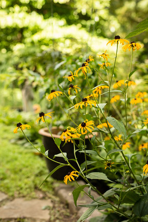 Sidewalk Shoes Black-eyed Susans