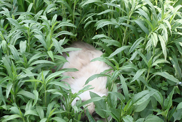 Where's Smudge?