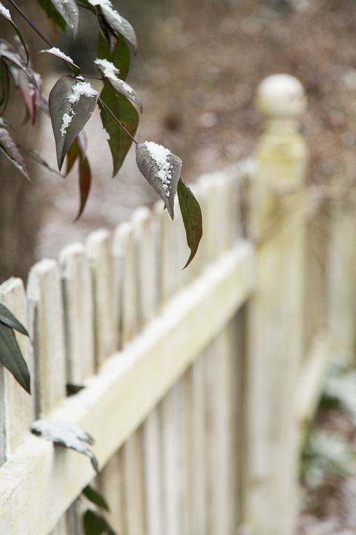 Snow on a leaf with a white picket fence