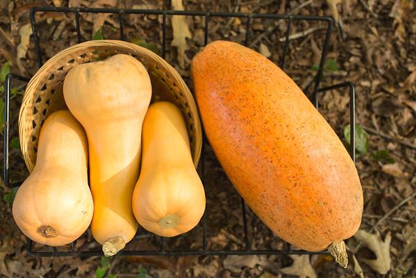 Butternut Squash and Long Pie Pumpkin