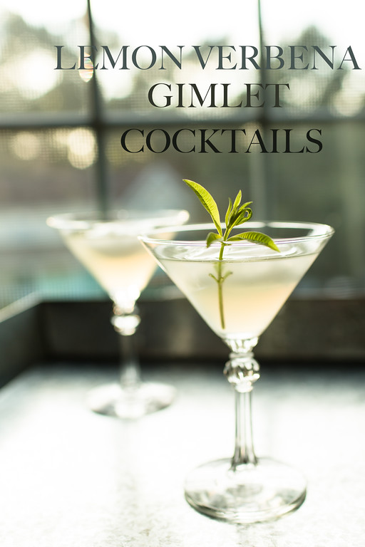 Lemon Verbena Gimlet - so refreshing and delicious!