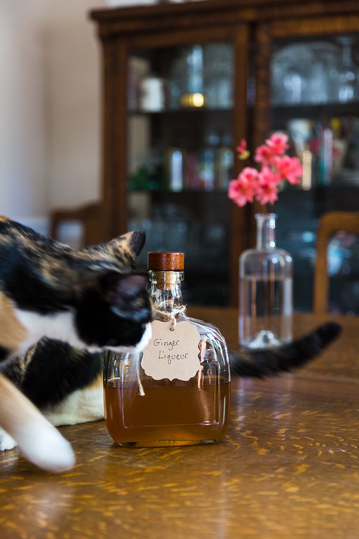 Cat with DIY homemade ginger liqueur