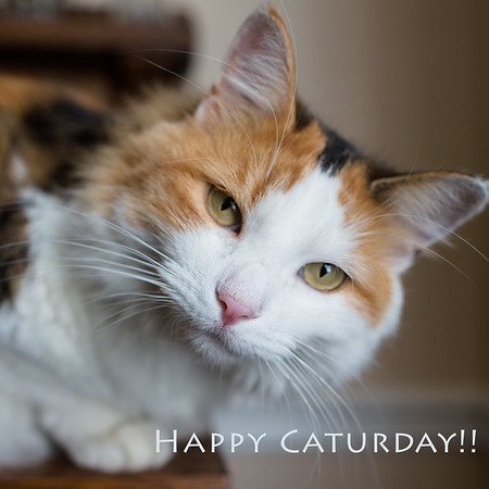 Happy Caturday Linky Party at Sidewalk Shoes every Saturday!