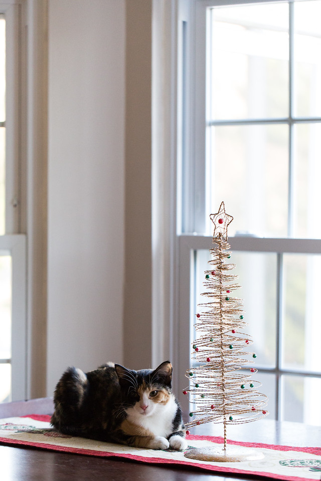 A calico kitten by her Christmas Tree