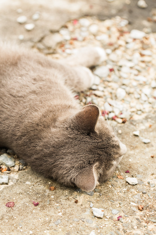 Gray cat on gravel.