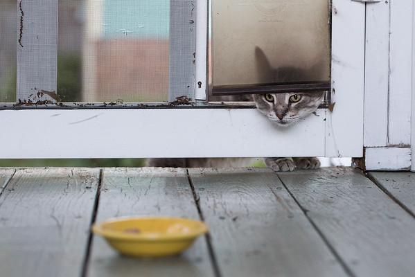 cat through cat door for Instinct Raw Cat Food