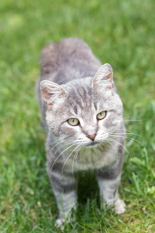 Stubby the Feral Kitty Cat | Happy Caay! - Sidewalk Shoes on squirrel home, chipmunk home, fast cat home, ferret home, mountain lion home, lizard home, duck home, pet cat home, dog cat home, stray cat home, cat lady home, pig cat home,