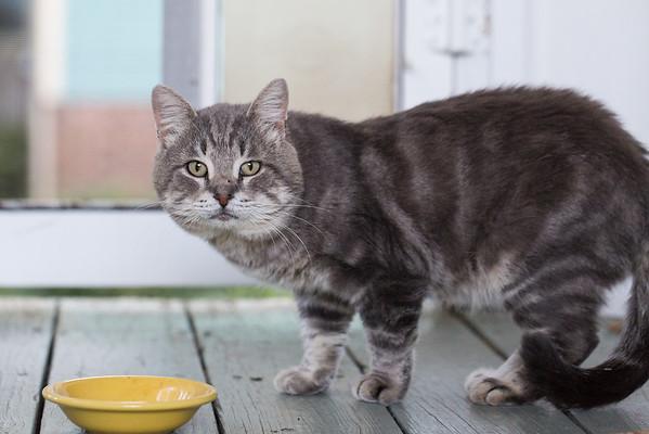 Stray cat eating Instinct Raw Cat Food