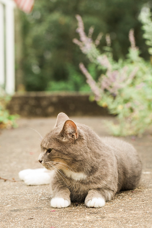 Gray cat on sidewalk.