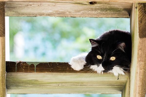 Tuxedo kitty cat on the stairs