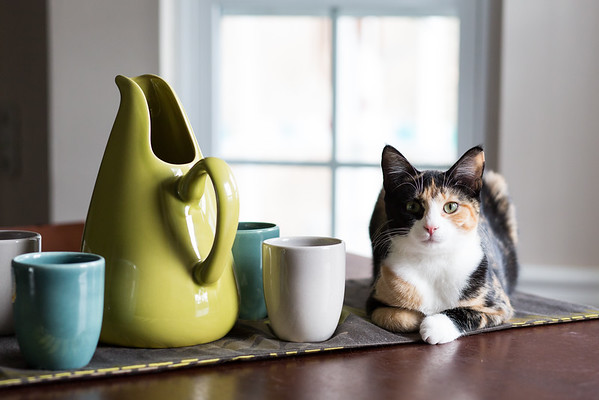 Luxie kitty sitting next to her Russel Wright pottery