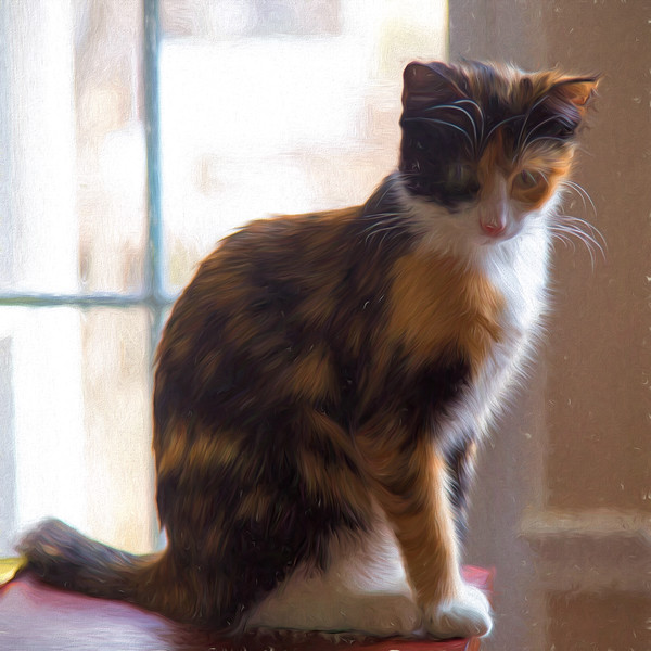 Artsy Calico Cat