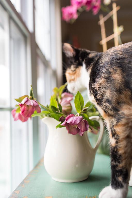 Photo bombing cat