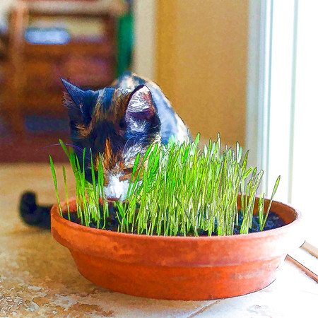 Ink and line of cat and cat grass