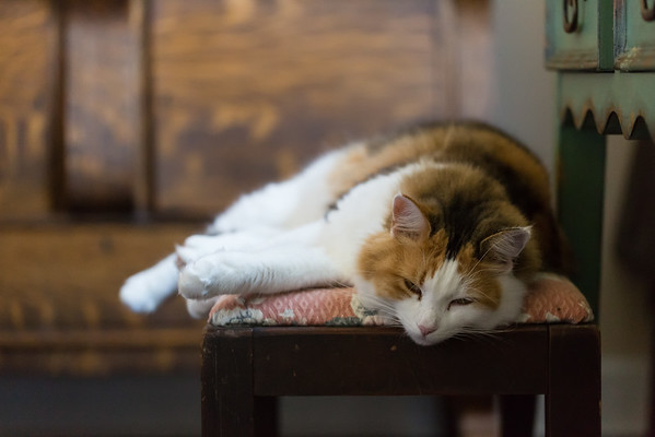 Calico cat on a bench