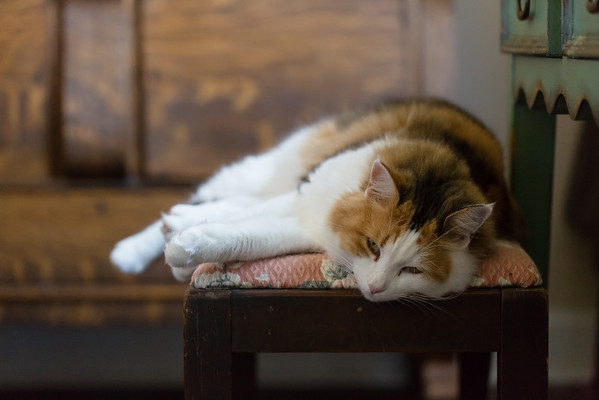 Calico cat on bench